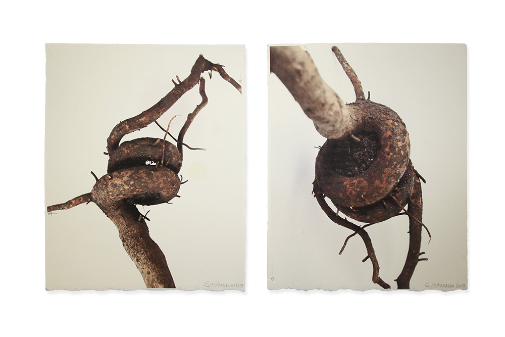 Sorrel Hofmann: Untitled: roots